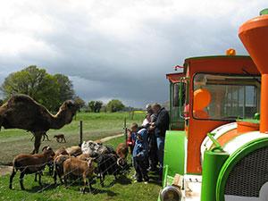 mouton-animaux-mai-2012-357